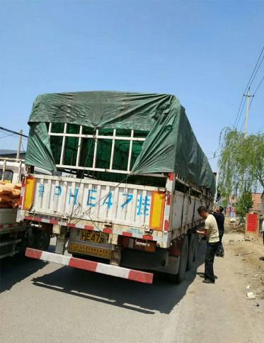 发往新疆的蓝亚麻、丰花月季、燕尾